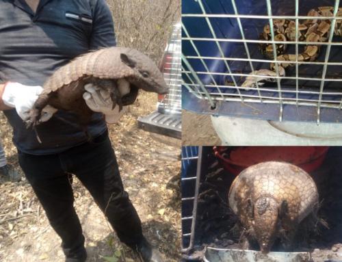 Animales afectados por los incendios son liberados