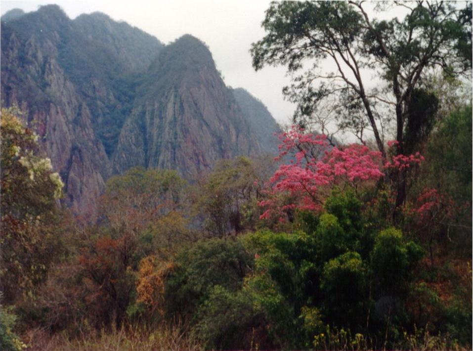 Selva en la Reserva Nacional de Flora y Fauna de Tariquía, Tarija