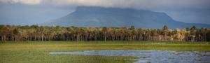 El Parque Nacional y Área Natural de Manejo Integrado Kaa Ila del Gran Chaco, Sitio Ramsar Palmar de las Islas (Santa Cruz) Foto: Walteres Ridder