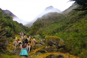 Camino el Choro, Cotapata