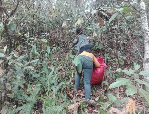 SERNAP: en Las Áreas Protegidas Nacionales no se permite la extracción y comercialización de plantas