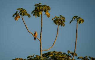 Foto: Samsa Sulonen, Reserva de Bioesfera Estación Biológica del Beni.