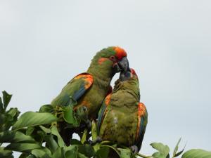 Foto: Tomas Calahuma, guardaparque del Parque Nacional Torotoro.