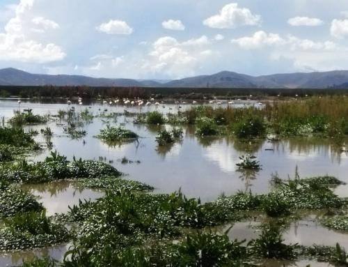 Isla Majawi en la Bahía de Cohana del Lago Titicaca fue el sitio de reunión entre las autoridades del Viceministerio de Medio Ambiente Gobierno Municipal de Pucarani y Autoridades Originarias de Chojasivi